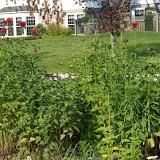 Melissa Jones Schoolyard Habitat Garden - Image%2B5.jpg