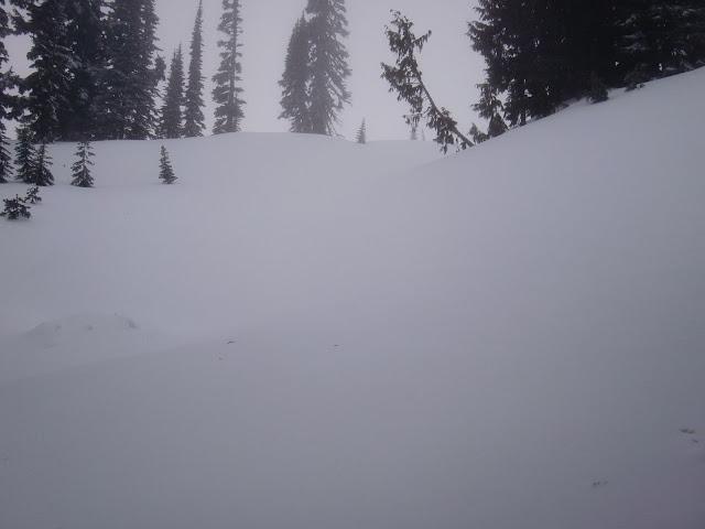 Winter Survival - CIMG1331.JPG
