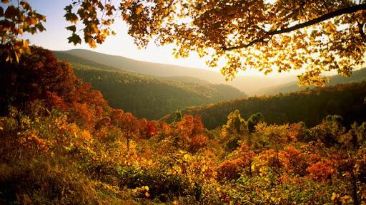 Autumn in Shenandoah National Park, Virginia.jpg
