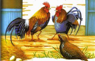 Los gallos y la perdiz fabulas cortas