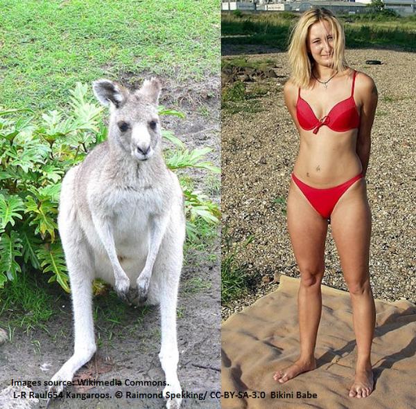 bikini and roo
