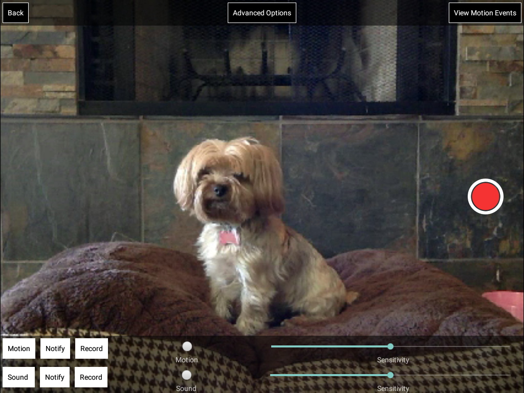 iCam Pro - Webcam Streaming- screenshot