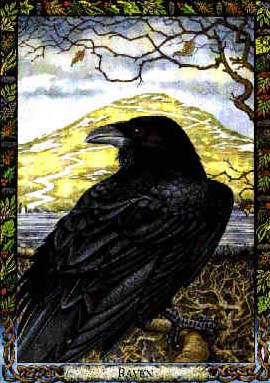 Raven Black, Ravens
