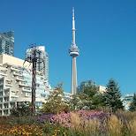 musical garden at Toronto Harborfront in Toronto, Ontario, Canada