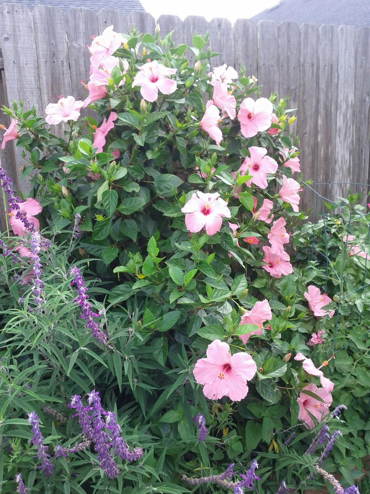 Gardening 2013 - IMG_20130526_103301.jpg
