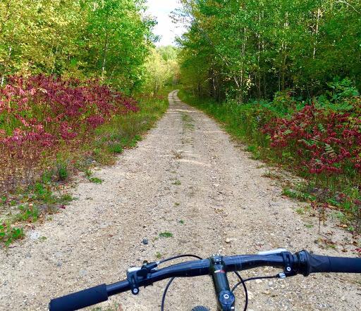 Sugarbush trail north of Maplelag