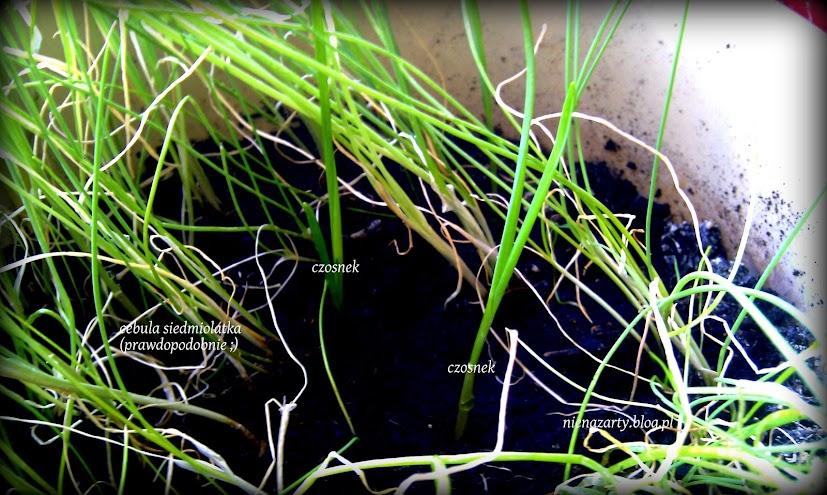 ogród na parapecie