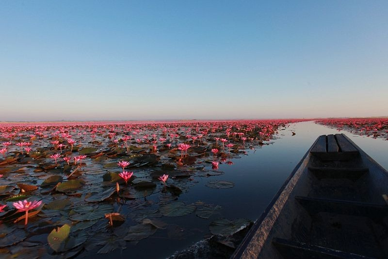 Red Lotus Lake, Kumphawapi, Thailand | Amusing Planet