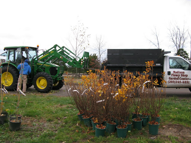 Madison Flower Shop delivered 75 bags of cedar mulch.