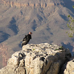 2010_06_06_Grand_Canyon