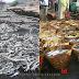 Banjir Ikan di Palangpang, Ternyata Daerah Ciwaru Penghasil Ikan Asin Sejak 1978