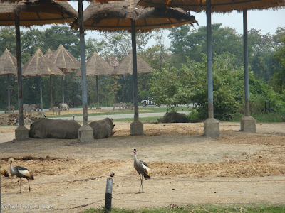 Safari World - Safari Park Bangkok Batch 2 Photo 9