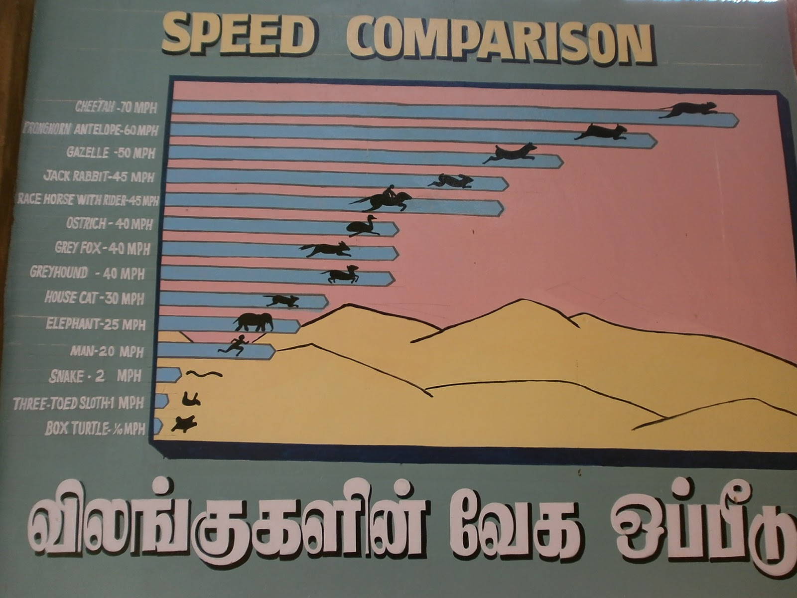 Speed comparison of the animals. - Ramyarajesh