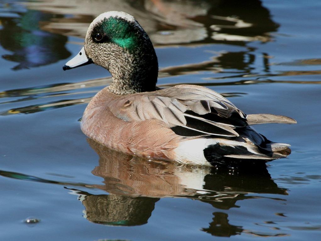 [bayoffundy.ca-SEABIRDS-40-Good-reaso%5B26%5D]