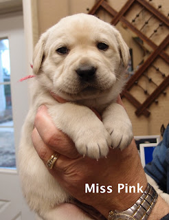 Don't wiggle Miss Pink!