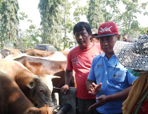 Dari Ngawi Tentang: Petugas Kesehatan Disnak Ngawi Lakukan Pemeriksaan Kesehatan Hewan Kurban.