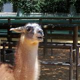 Houston Zoo - 116_8532.JPG