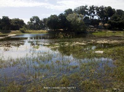 2011-07-04: Ramona Grasslands