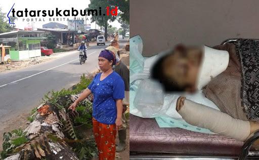 Insiden Beruntun Pohon Tumbang Renggut Jiwa di Jalan Sukabumi - Palabuhanratu