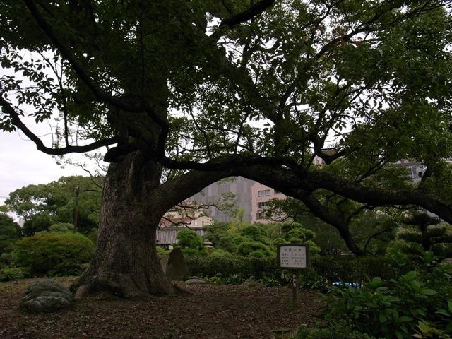 相楽園市民の木