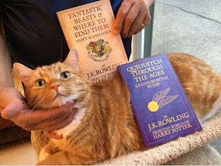 Ripple with Harry Potter books