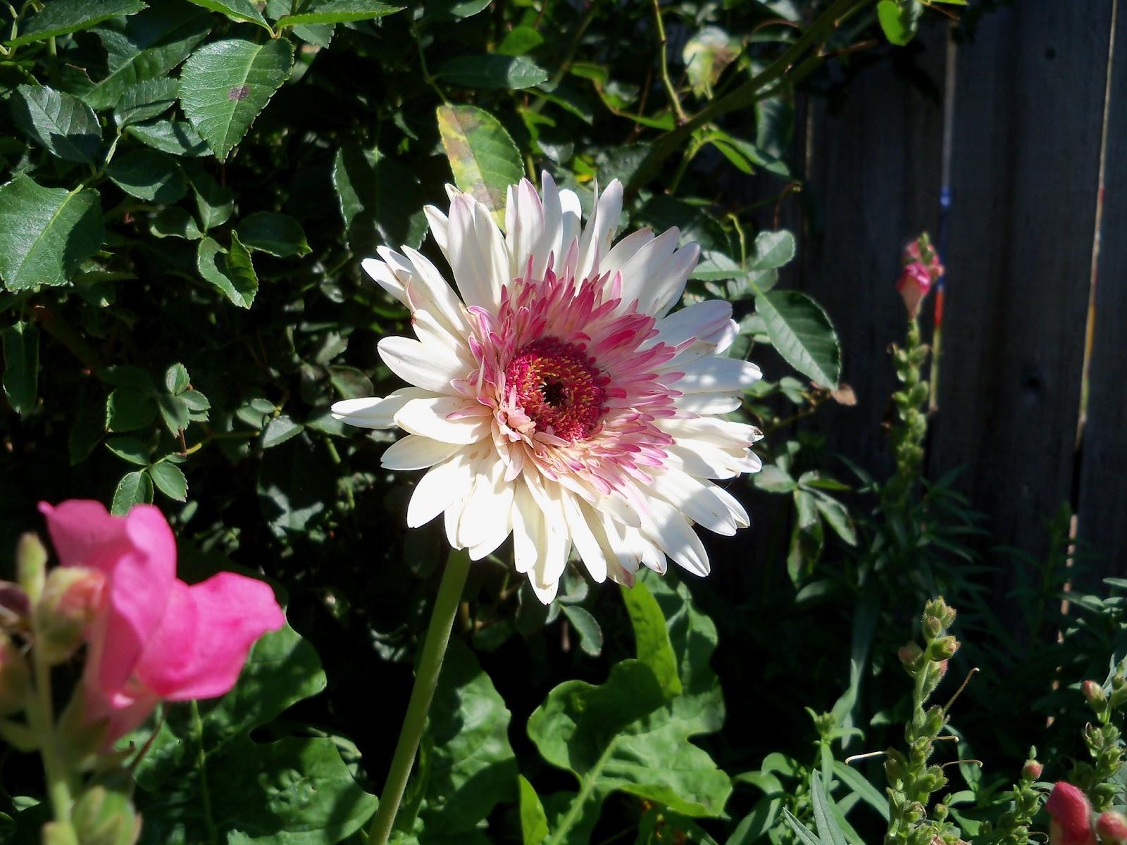 Gardening 2011 - 100_9044.JPG