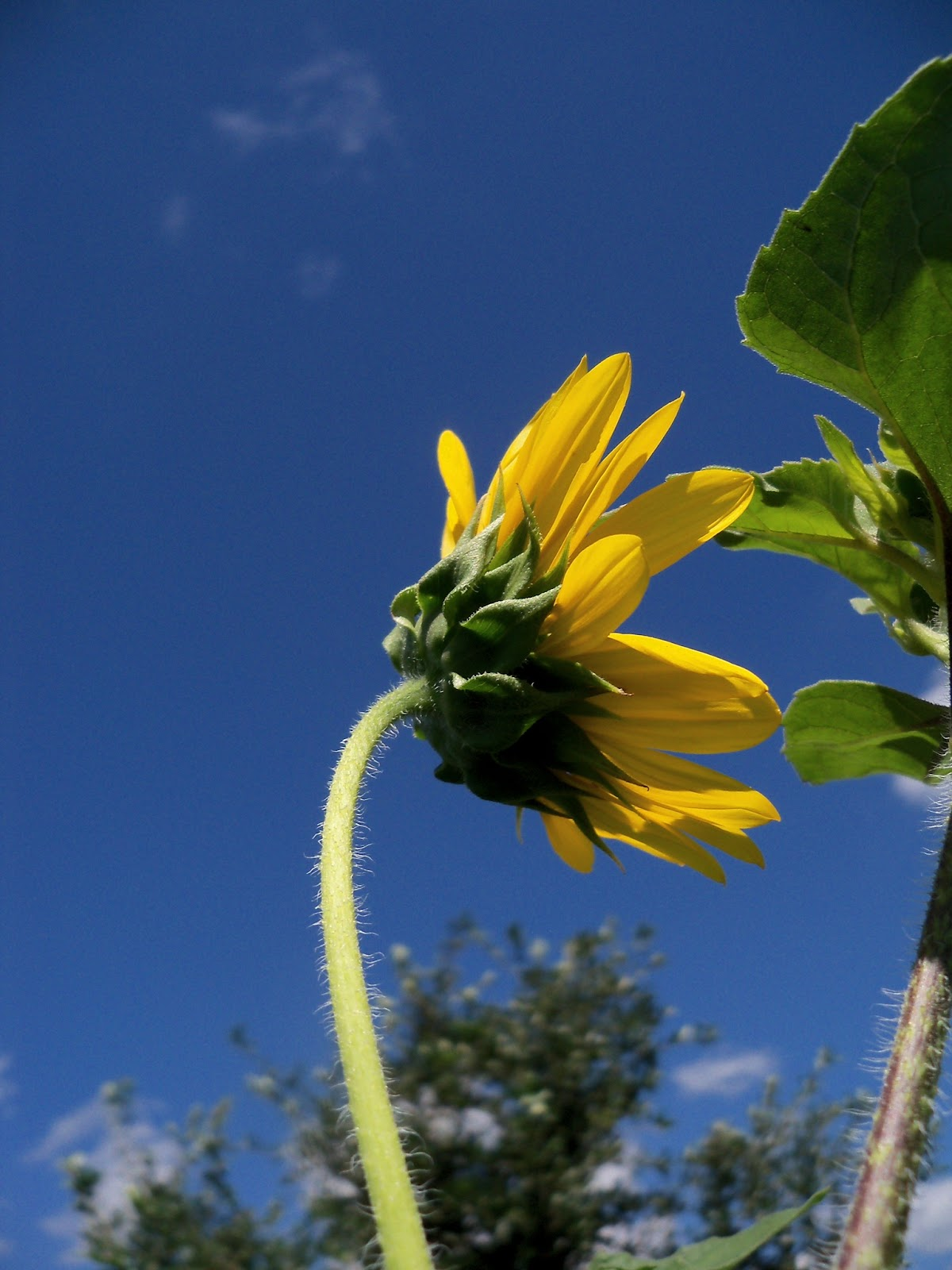 Gardening 2012 - 115_2528.JPG
