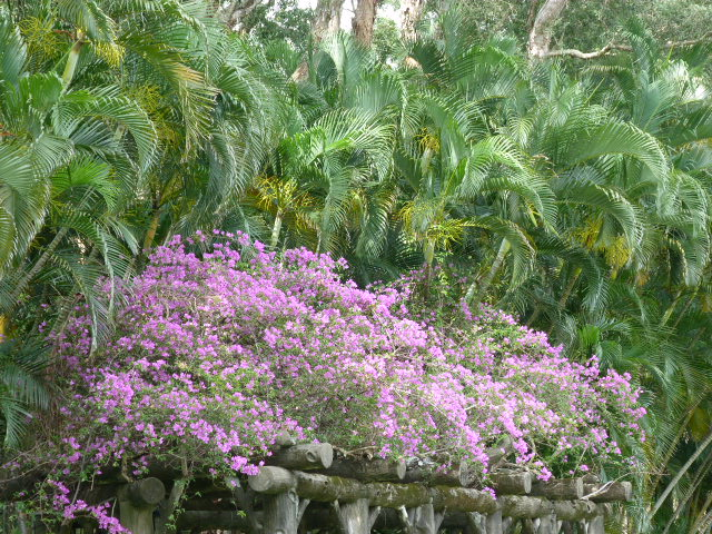 TAIWAN.TAIPEI, shilin une des villas de CKS dans un ancien parc botanique et autres vues - 1sichuan%2B024.JPG