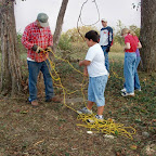 Untangling a rope. The rope is going to be used to pull down a tree that is hung up in another hugh tree.
