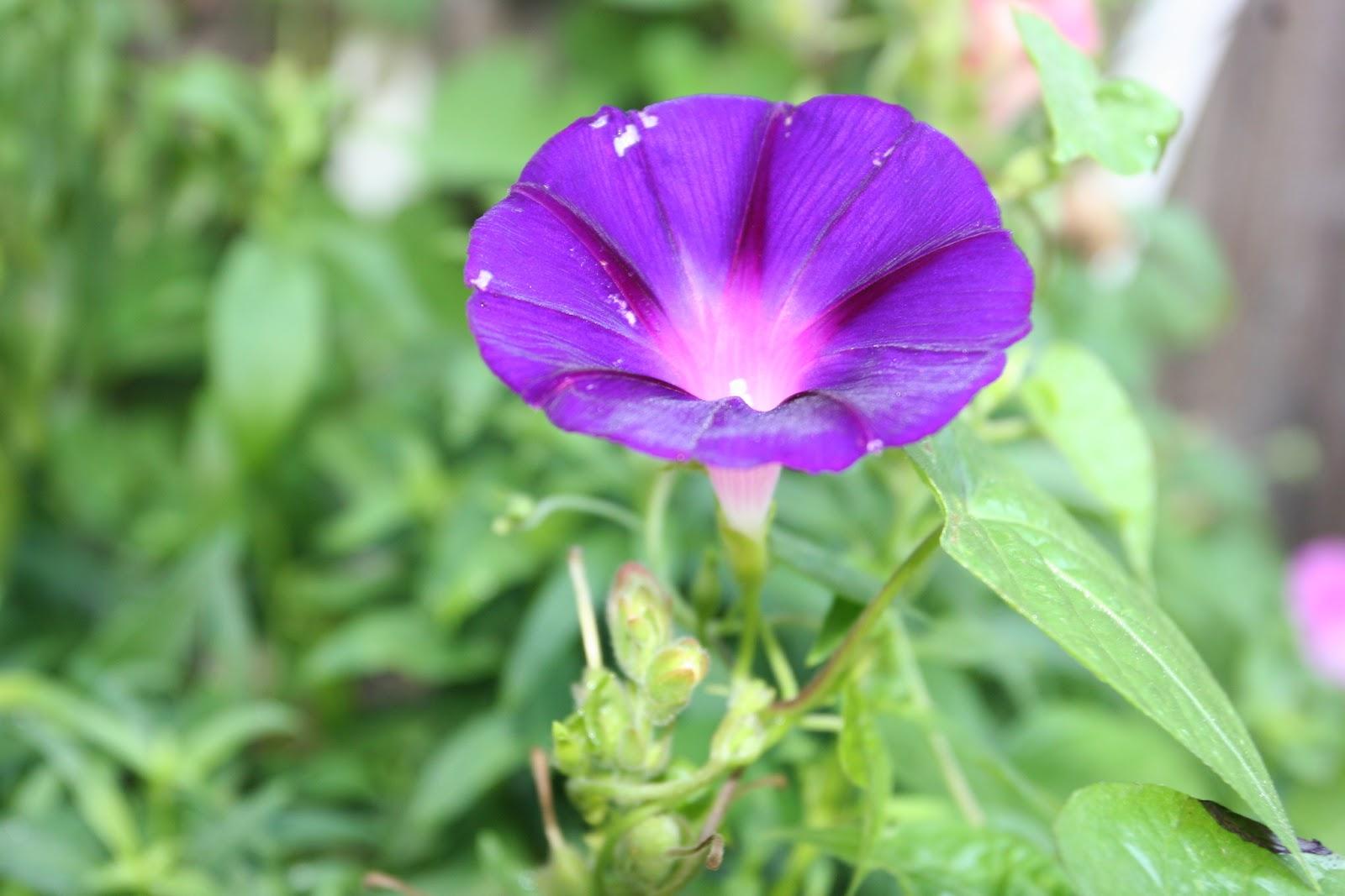 Gardening 2012 - IMG_3136.JPG