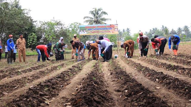 Petani Jagung Bisa Kaya dengan Manfaatkan Lahan Kosong.