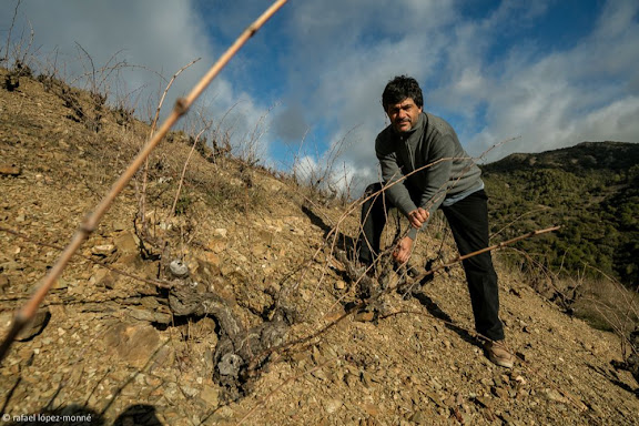 Josep Maria Llauradó, propietari del Celler Mas del Botó.Poda de vinyes velles de coster. Vall del Cortiella (Priorat). DO TarragonaAlforja, Baix Camp, Tarragona