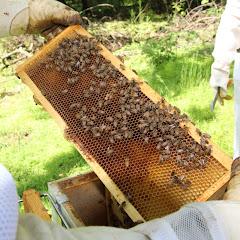 PLC Beekeeping Class 5/20/18 - IMG_8127.JPG