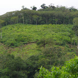Las Juntas, 1350 m (Carchi, Équateur), 4 décembre 2013. Photo : J.-M. Gayman