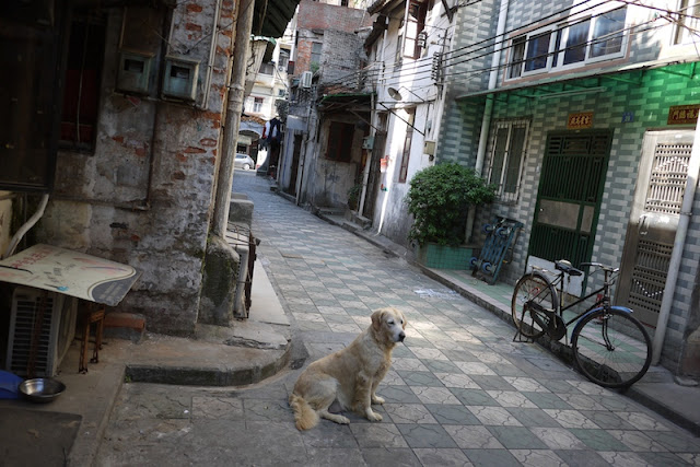dog waiting in an alley in Guangzhou, China