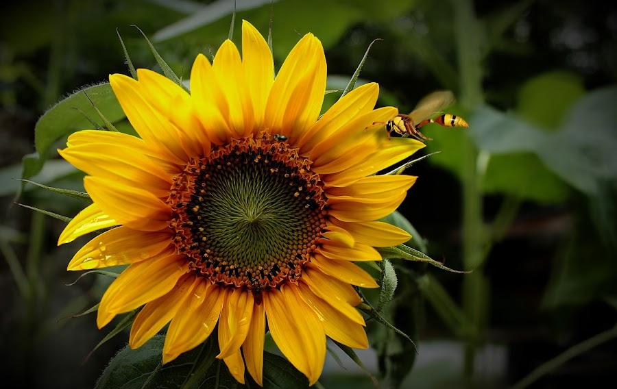 by Paul Mays - Flowers Single Flower (  )