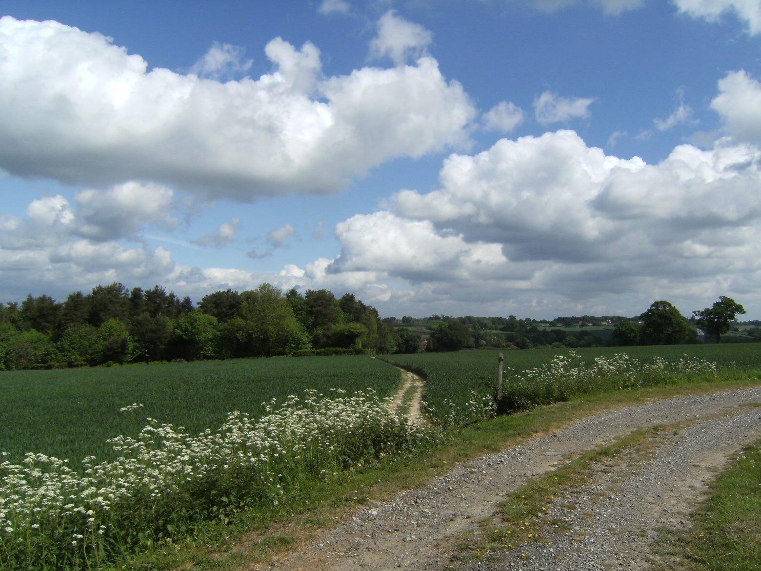 DSCF7868 Footpath near Renby Farm