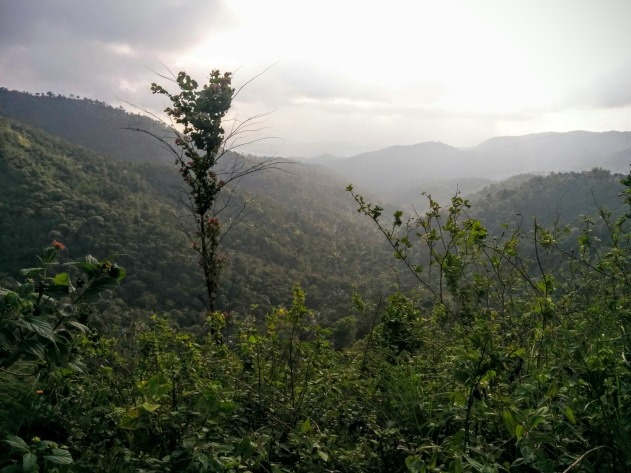 Periyar Forests as seen from hike near Niraamaya Cardamom Club, Thekkady
