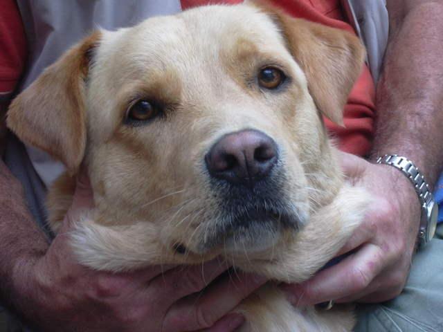 20110629 Hundespaziergang38 - HS%2B38%2B%252820%2529.JPG