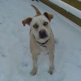 Sam likes snow.