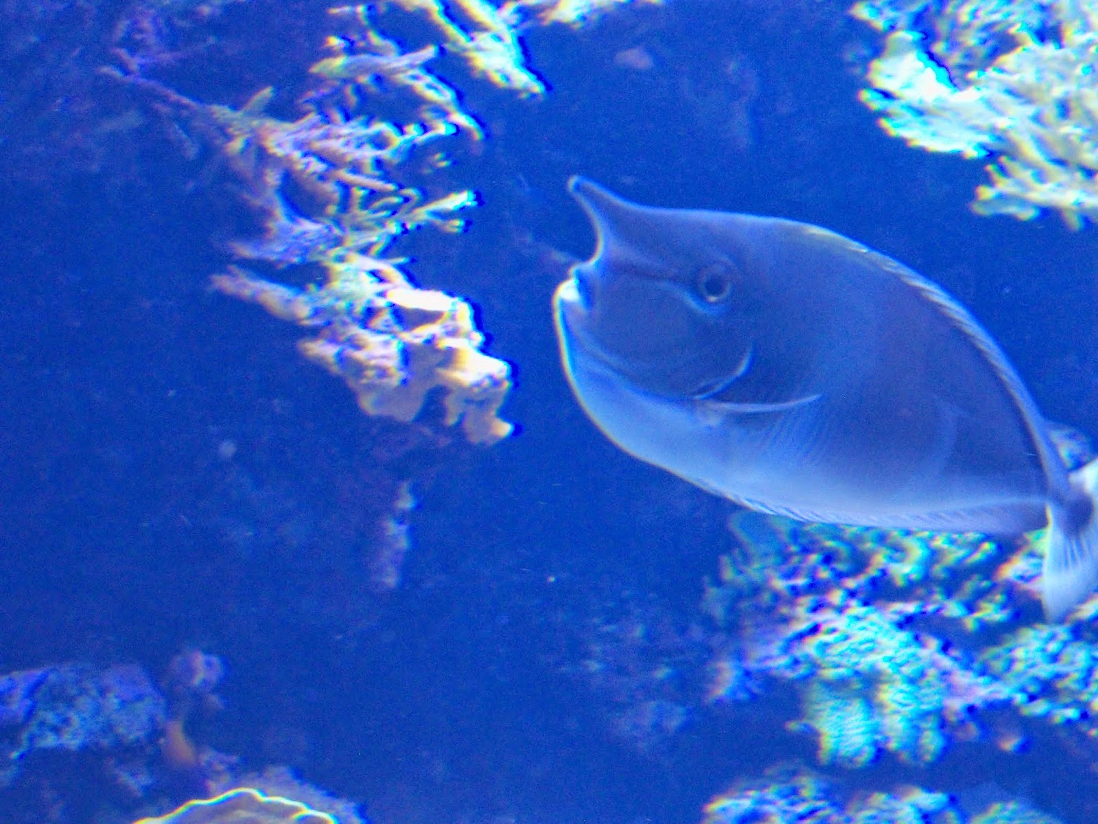 Downtown Aquarium - 116_4001.JPG