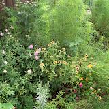 Gardening 2010, Part Three - 101_4719.JPG