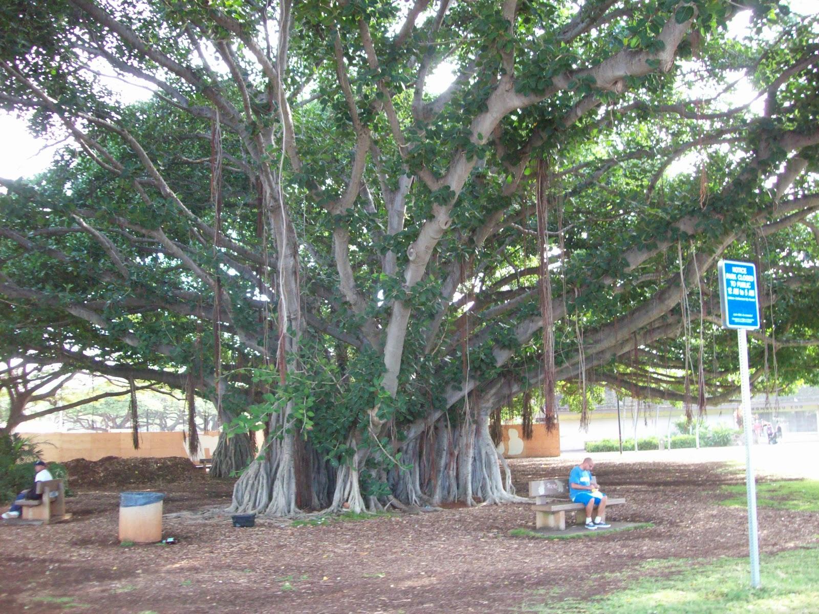 Hawaii Day 2 - 114_0904.JPG