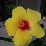 Gardening 2010, Part Three - 101_4961.JPG