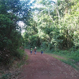 Dans la forêt (secondaire). Colider (Mato Grosso, Brésil), 20 juillet 2010. Photo : Cidinha Rissi