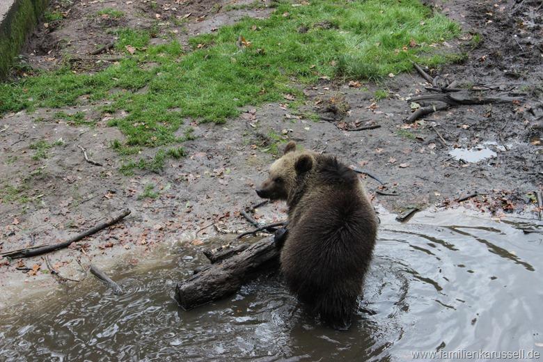 Wildpark_Gangelt_Bären