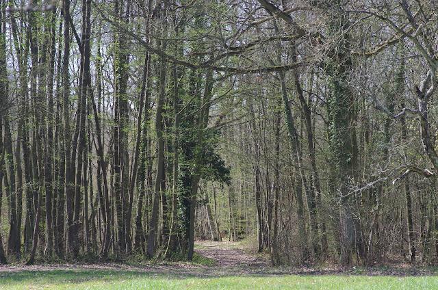 Les Hautes-Lisières (Rouvres, 28), 29 mars 2012. Photo : J.-M. Gayman