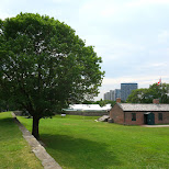 giant green tree at the Fort York fortress in Toronto in Toronto, Ontario, Canada