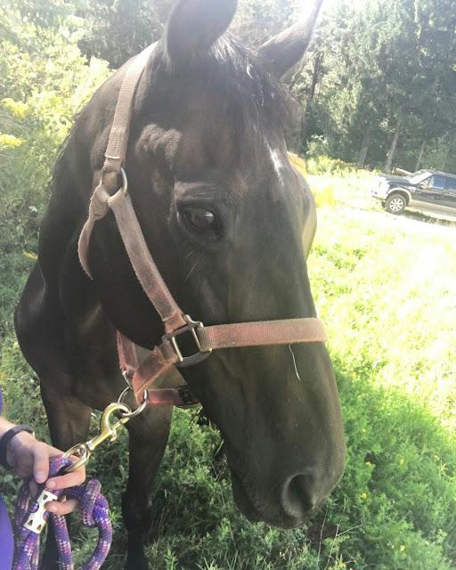 guest-blog-82-horses-as-mirrors-by-deanna-selioutski