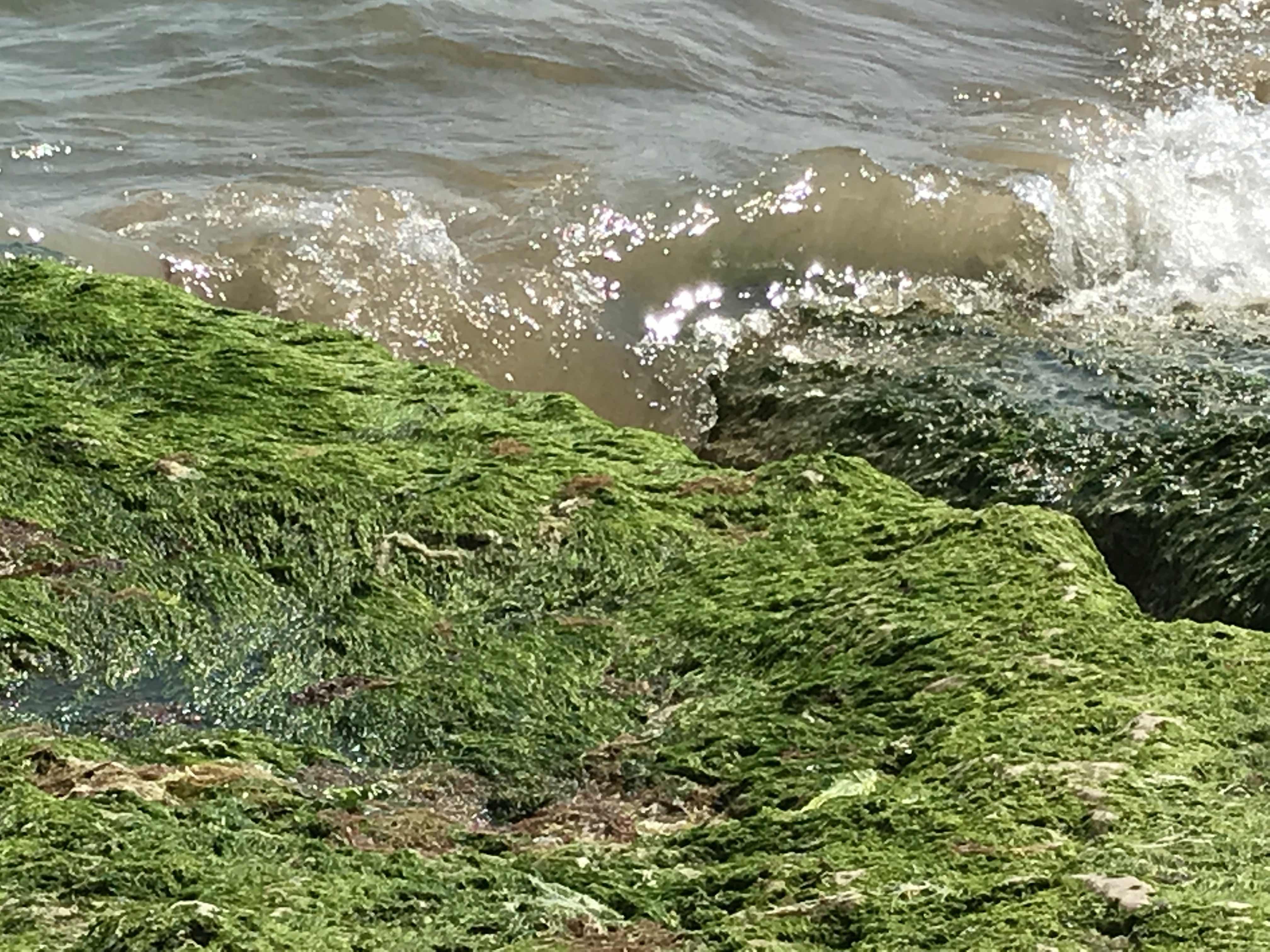 seaweed reference photo